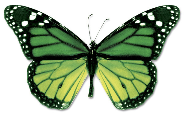 Koliko dugo leptir živi